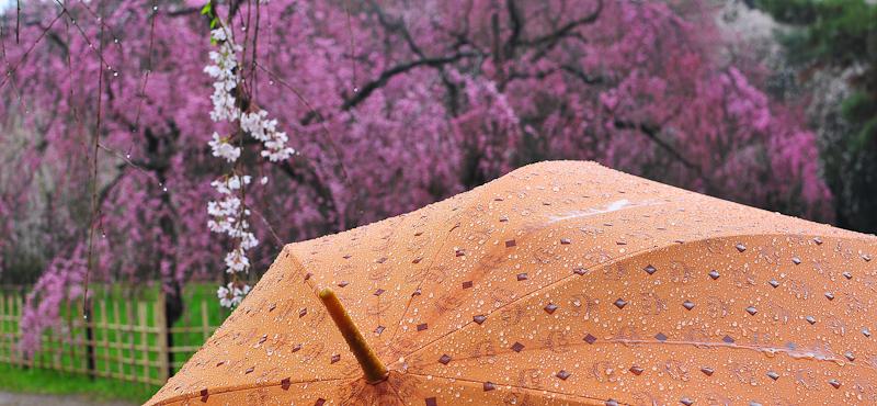 Rainy Day 「雨の日」