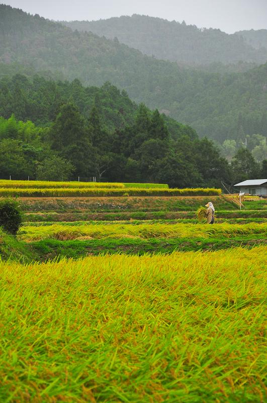 Harvest Fields, 2
