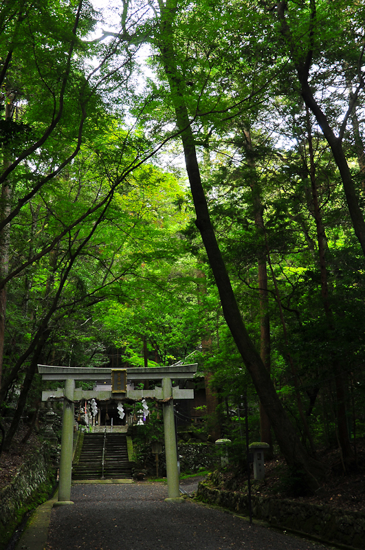 Into the Light (崇道神社)