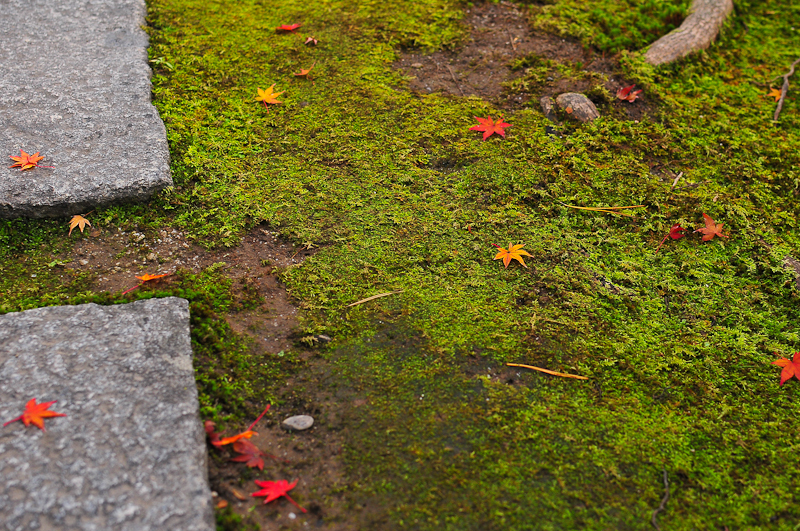 Autumn Path (秋の小道)