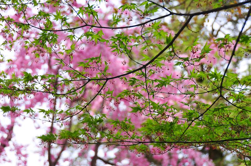 Spring 「春」
