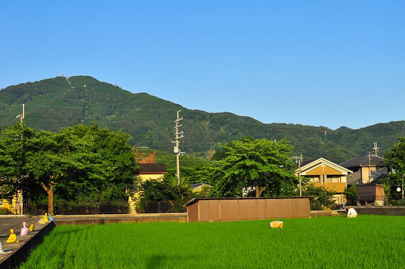 Summer Rice Field 「夏の田んぼ」