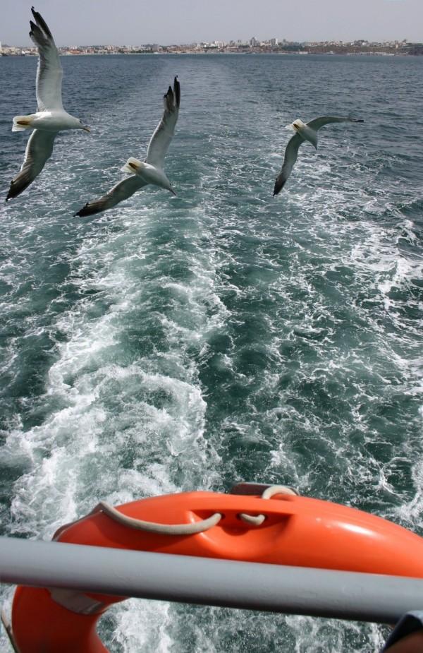 Birds on the sea!