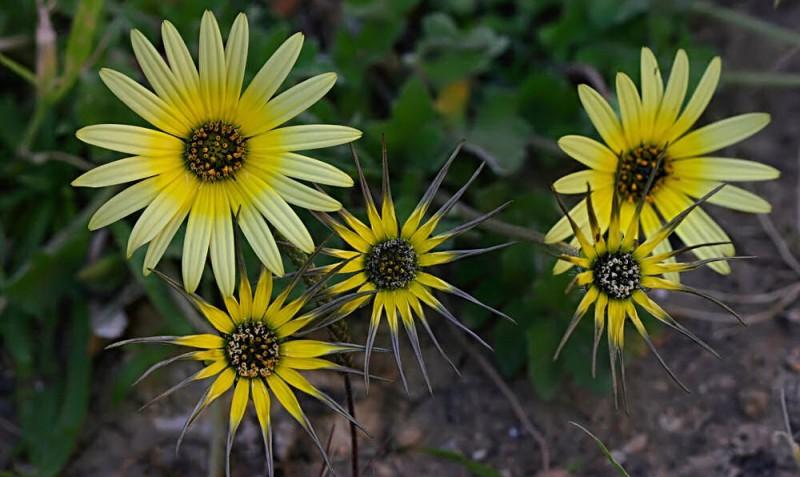 Flowers XII