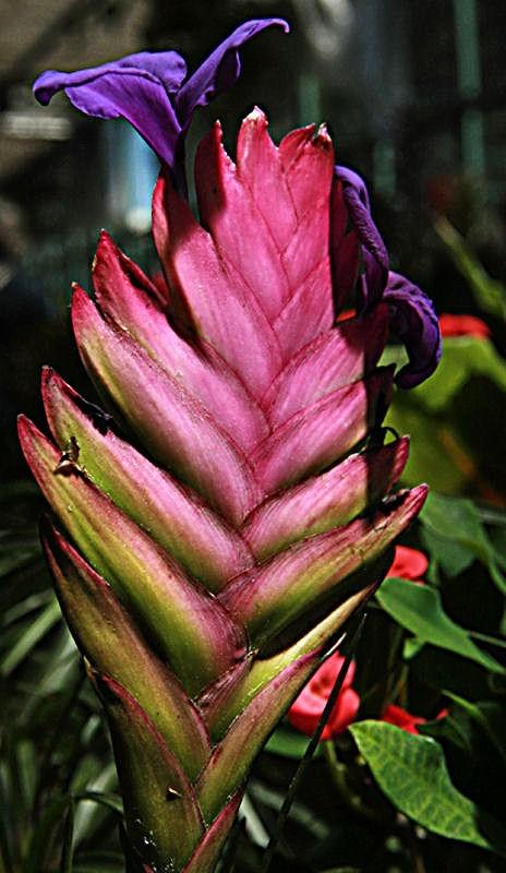 Flowers XVII