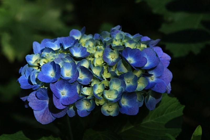 Flowers XX