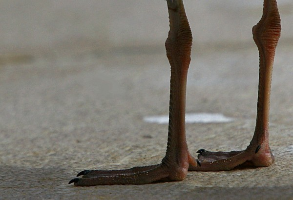 Only legs VI