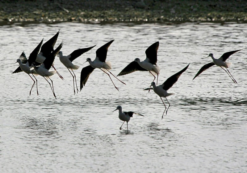 Birds VI