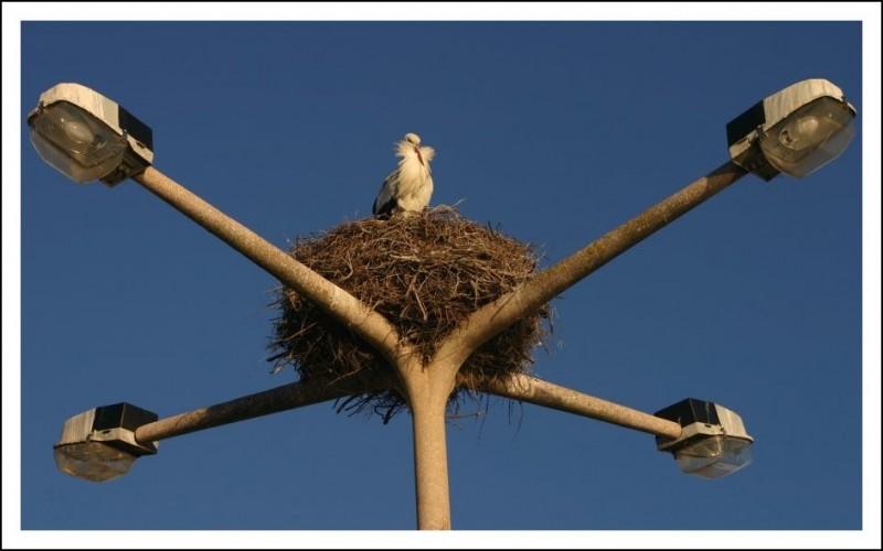 Birds XI