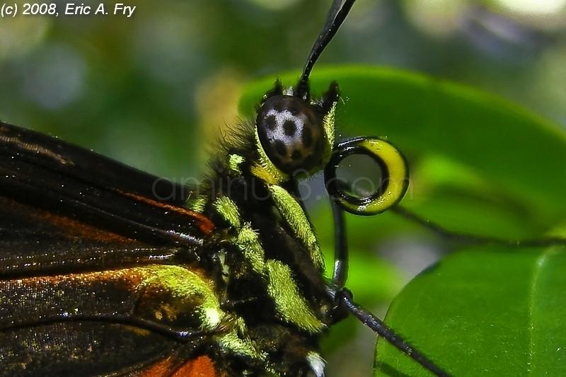 Cockrell Butterfly Center, Houston, TX