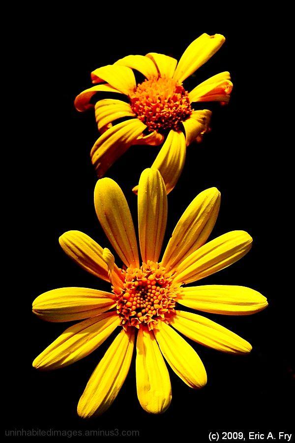 Yellow, Alone...