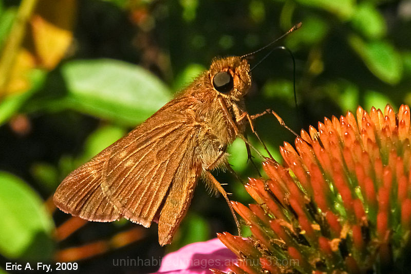 Last of the Skippers 1/2