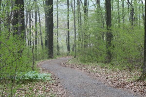 Merrill Creek...Path around the bend