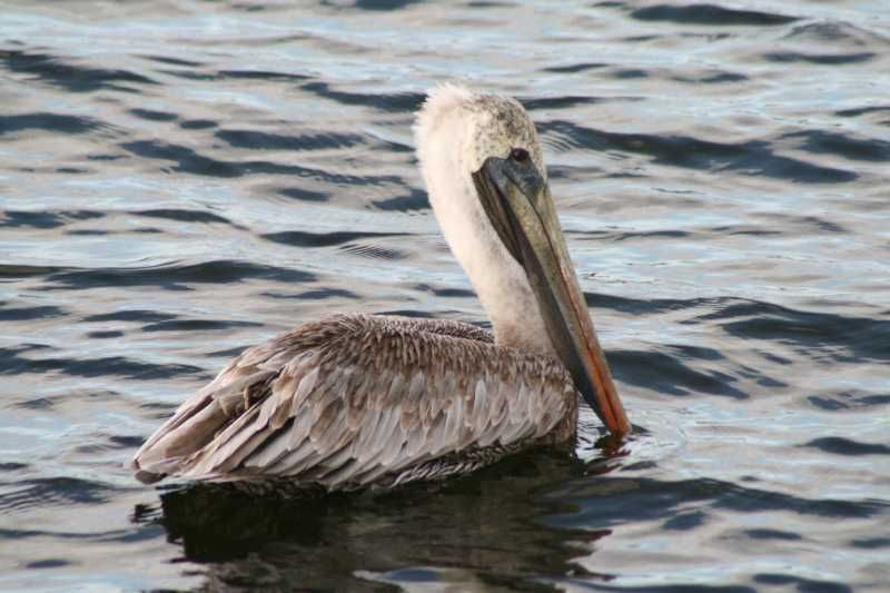Just swimming by in Tarpon Springs