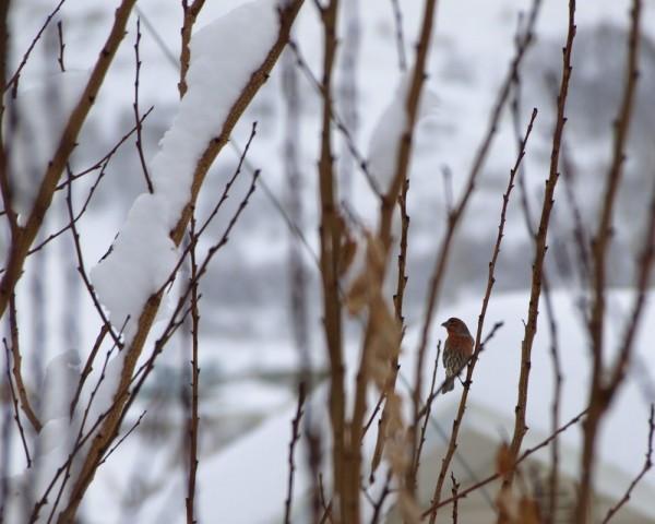 Find the Birdie