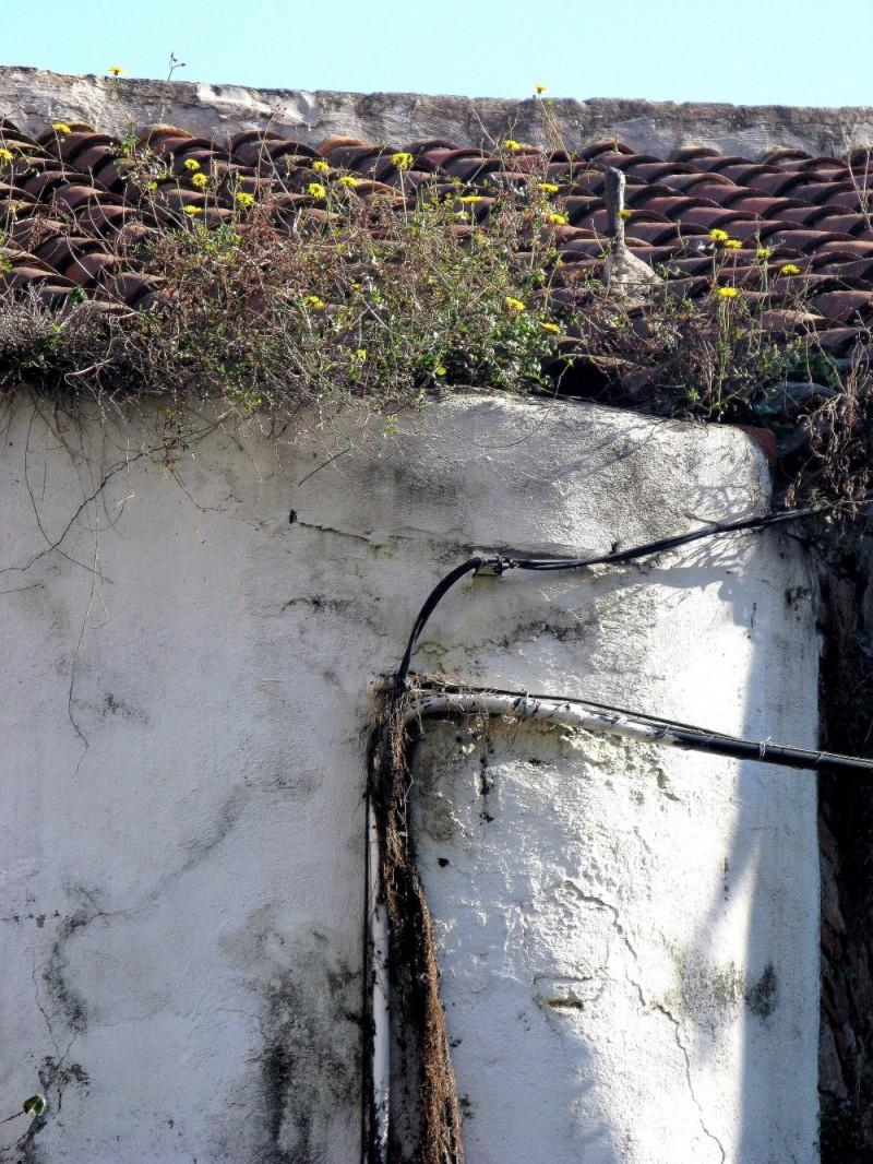 flores en el tejado