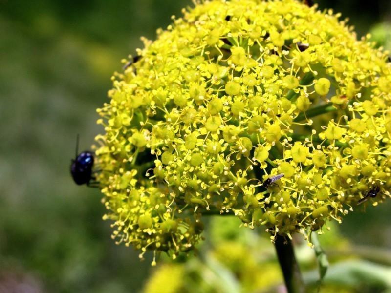 primavera en Menorca