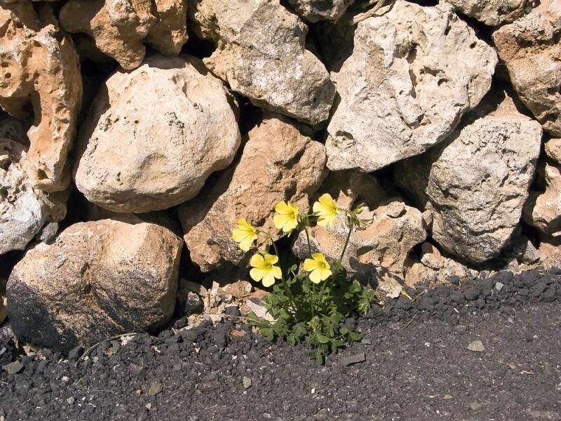 flors al marge