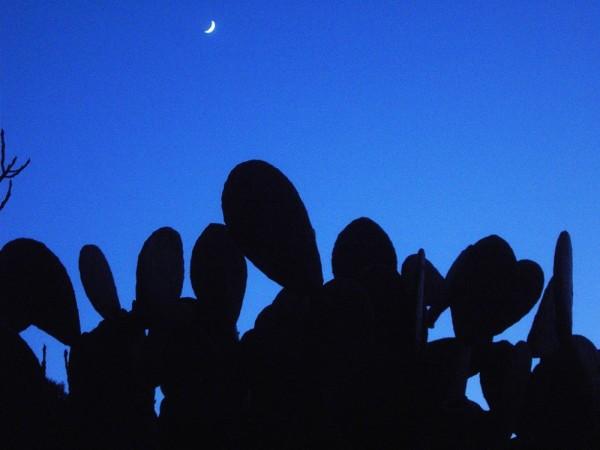 luna i cactus
