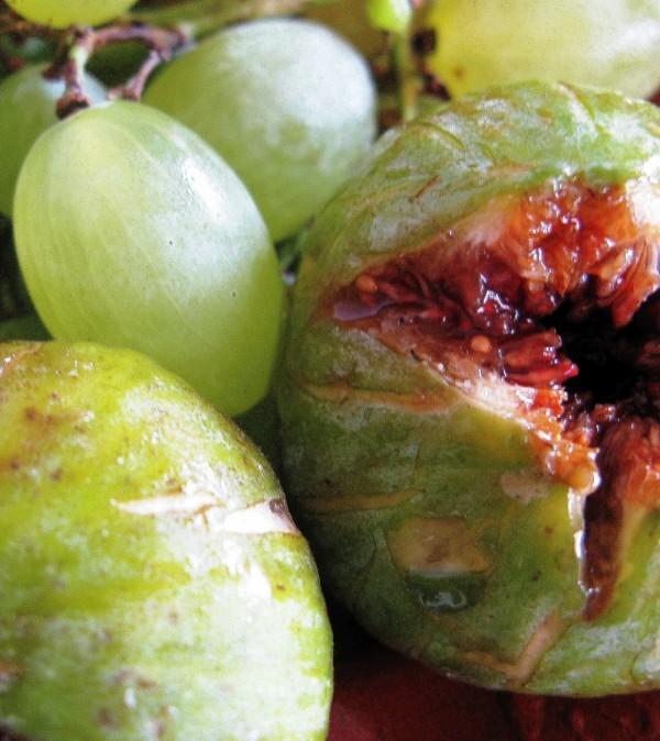 frutos mediterraneos