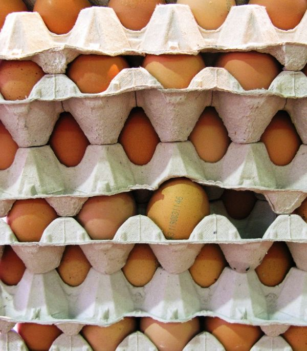 Ous, huevos