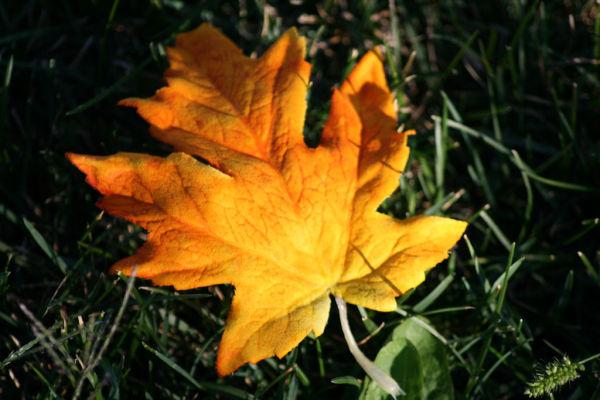 Leafing Summer