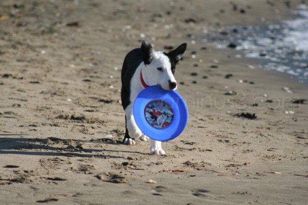 Frisbee (learning to catch a Frisbee)