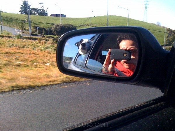 Road Trip with Frisbee Dogus