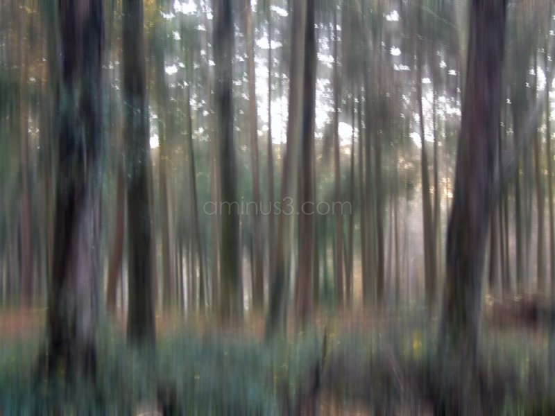 Image of trees with a virtual vaseline filter