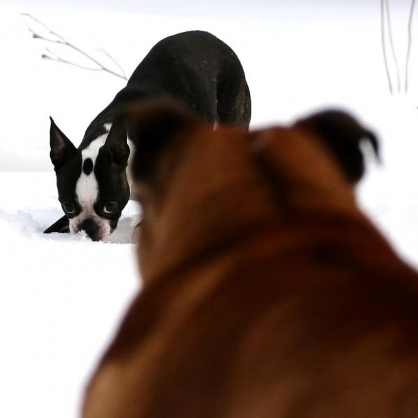 Showdown in the Snow