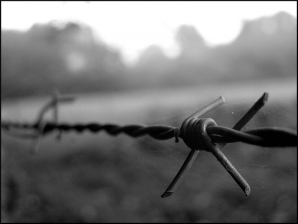Barbed wire in the fog