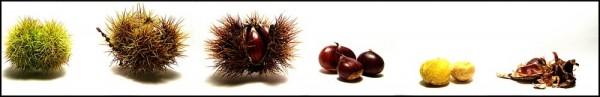 Chestnut deconstruction