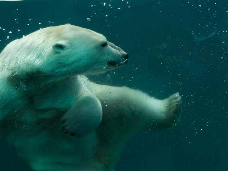 Polar kung fu