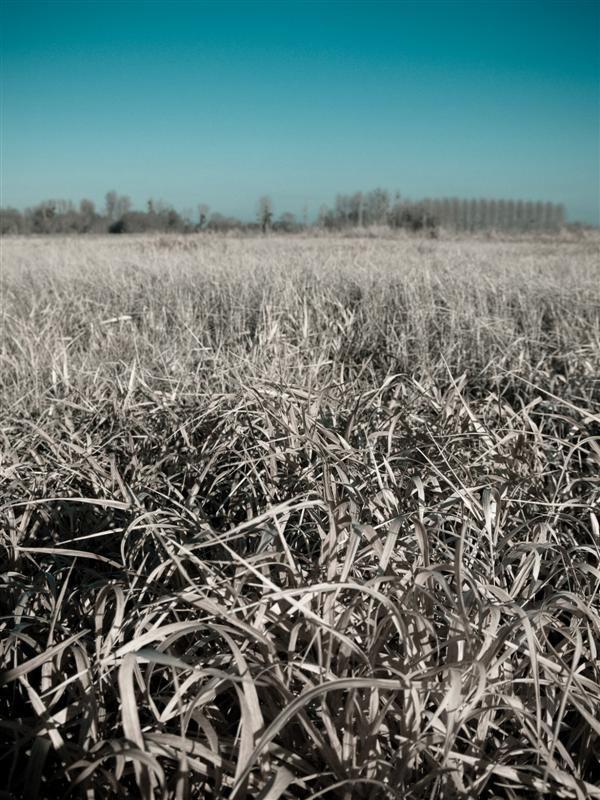 Cold cold field