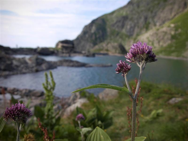 Flowers, lake, yeah it's cool