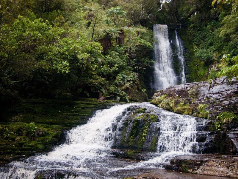 Rain forest fall