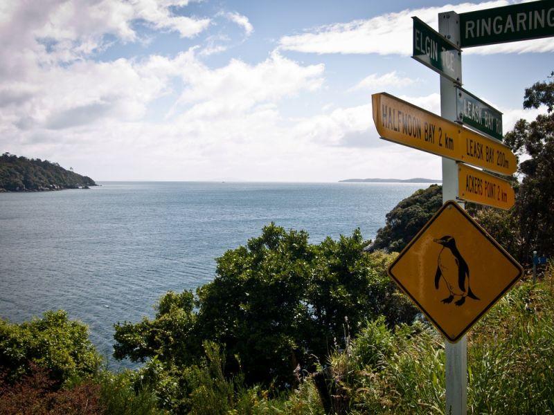 Carreful, pingouins crossing