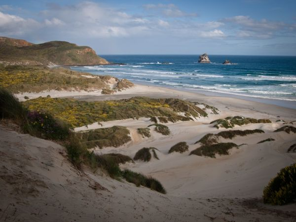 Sandy beach, pingouins paradise
