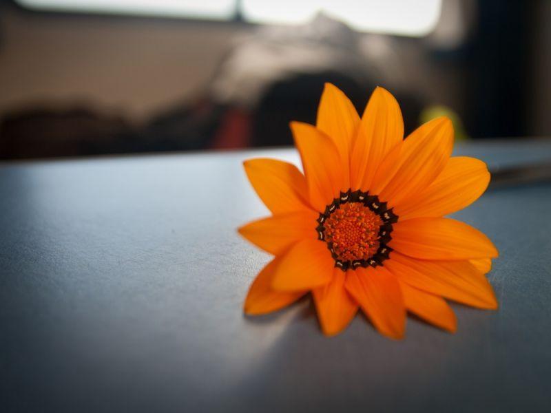A kind of peacefull beauty