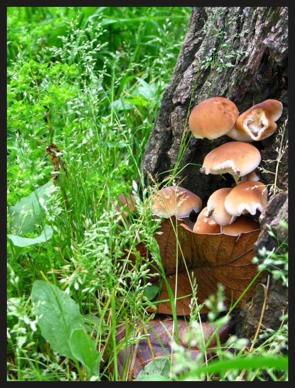 mushroom in front of a tree in the garden