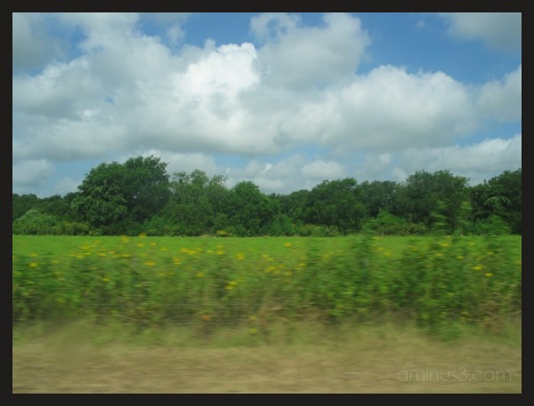 view from the car driving through Texas