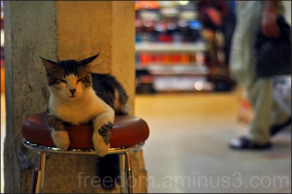 cat, bazaar, istanbul, chair, turkey