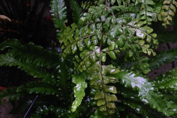 ferns after rain