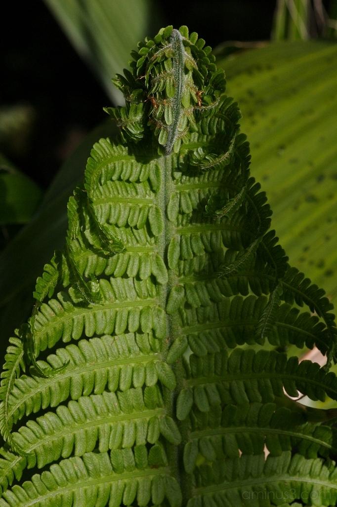 Plant Week II