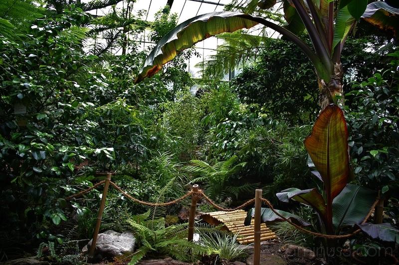 Tropical Glasshouse, Botanical Garden, Cologne