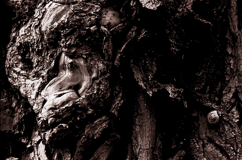 Treescape (pt.2)