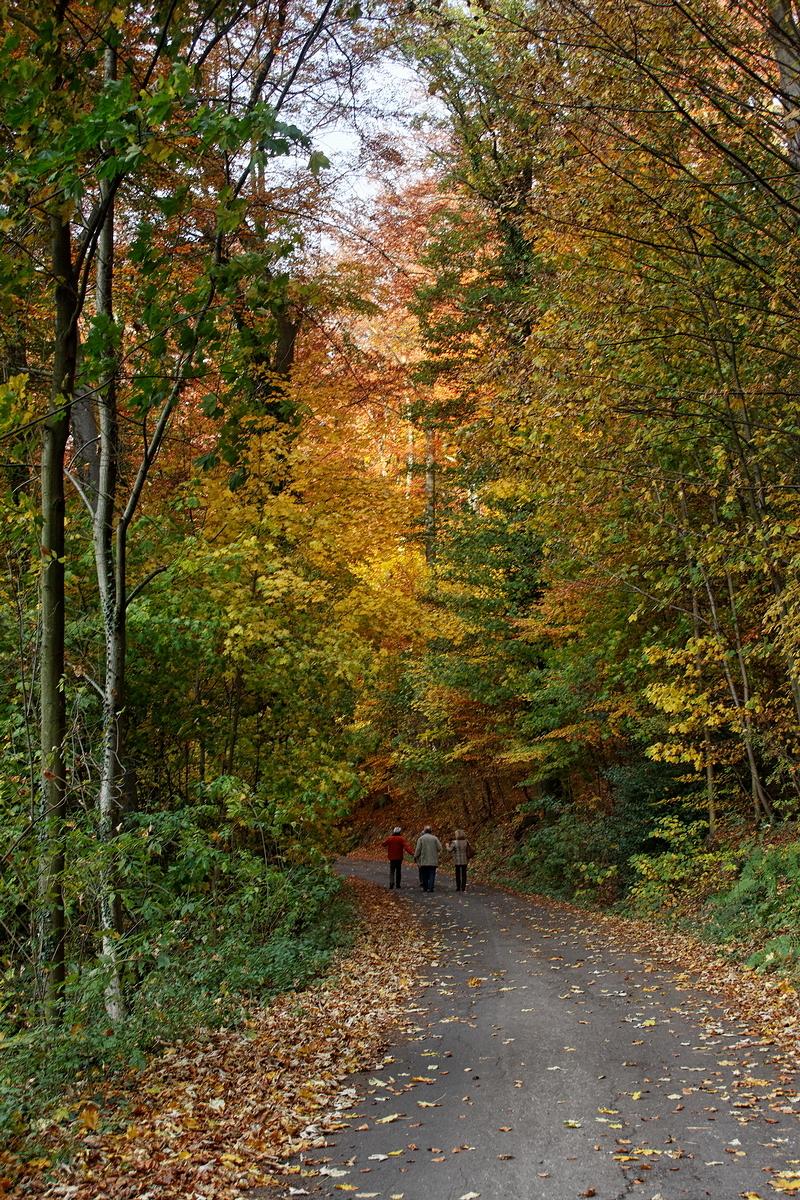 Climbing Drachenfels Hill