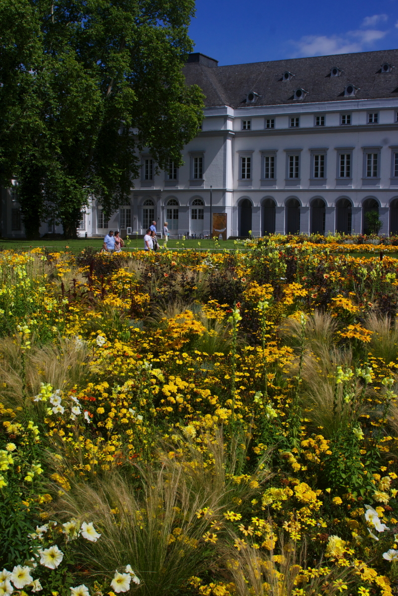 Flowers and Koblenz Castle