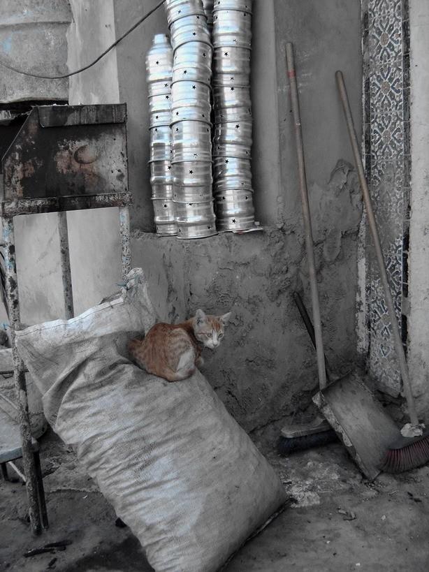 chat du souk