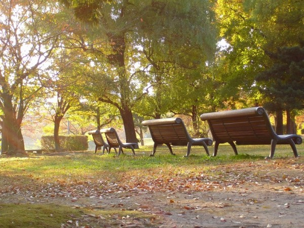 Light in morning,kasuga park 8:09